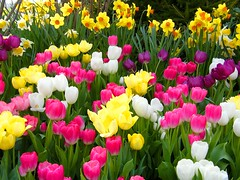 I Miss Spring Colors (Stanley Zimny (Thank You for 21 Million views)) Tags: spring seasons colors flowers tulip