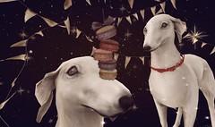 macaron party! (Bisou @ The Outer Garden) Tags: {anc} virtualworld sl avatar deco crystal anc secondlife confetti fantasygachacarnival snow dust dessert macaron