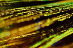 gold and green (sure2talk) Tags: macromondays mysterious nikond7000 nikkor85mmf35gafsedvrmicro macro closeup goldandgreen bokeh shallowdof abstract explore feather peacockfeather