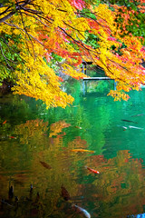 Full color (sonica@2006) Tags: full color carps swimming how is feeling japan yamanashi xm1 xf35mm fujifilm fujinon november autumn fall platinumheartaward