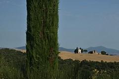 hide-and-seek (robra shotography []O]) Tags: tree albero tuacany vitaleta valdorcia toscana tuscany sooc