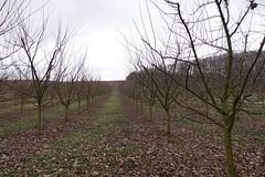 Obstpflanzung im Dünbach-Tal