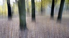 Im Stadtpark (gatierf) Tags: giesen herbst stadtpark mittelhessen autumn forest