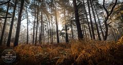 Formation (SimonTHGolfer) Tags: landscape suffolk dawn mist fog forest woodland sutton light crepuscularrays nikon eastanglia simontalbothurnphotography autumn winter