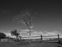 Leafless tree and fence (Tim Ravenscroft) Tags: tree landscape blueridgemountains monochrome blackandwhite northcarolina usa fence