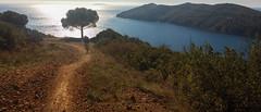 No brakes (max.grassi) Tags: 2016 adventure avventura elba isola italia italy mtb offroad toscana travel tuscany