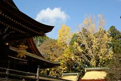 DSC02825 (MrSUIZOU) Tags: 京都 紅葉 北野天満宮 平野神社 十月桜