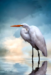 At Peace (cd32919) Tags: egret white bird avian texture backgroud reflection