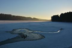 D71_9205A (vkalivoda) Tags: daybreak dawn amanecer alba tagesanbruch rybník pond jedovnice tree olšovec earlymorning krajina landscape outdoor
