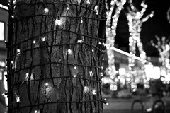 DSC03147 (Kyle Becker) Tags: lights tree christmas