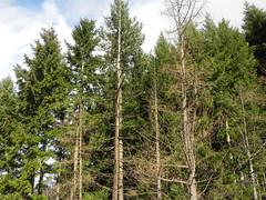 DSCN7482 (Gianluigi Roda / Photographer) Tags: apennines autumn lateautumn trees fir larch