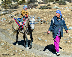 Mother and daughter (isitaboutabicycle) Tags: nepal horse mountains girl trekking trek child daughter mother pony himalaya circuit annapurna motherandchild motheranddaughter transhumance