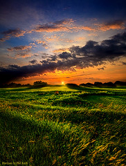 Summer Dreams (Phil~Koch) Tags: morning flowers blue autumn winter sunset red portrait orange sun snow green fall love ice nature floral field leaves yellow vertical wisconsin clouds sunrise season photography landscapes office spring twilight louisiana peace earth farm horizon scenic meadow inspired naturallight farmland photograph environment serene agriculture inspirational nationalgeographic horizons summerspring flickrbronzetrophygroup philkoch