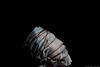 5La necesidad de la muerte (Jucalo Photo) Tags: portrait self canon colombia bogotá autoretrato camilo julián alarcón gordillo strobits surealismo selprtrait jucalo jucalovisual camilojucalo camilojucaloalarcon