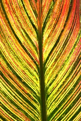 Rain Releaf (Influx Photo's) Tags: blue red orange plant green colors its up rain yellow canon leaf know vibrant tags more lowes cliche shut