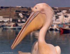 Mykonos  1989 (Stratos ...is BUSY) Tags: vacation film island one holidays minolta kodak greece series vivitar mykonos 70210 stratos myconos  xgm