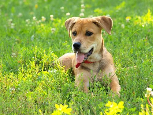Roxy At the Dog Park