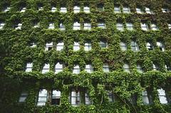 (Taylor Shorten) Tags: street building overgrown vancouver sony vine westend a99 tshorten taylorshorten