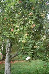 "Fireside Apple Tree <a style=""margin-left:10px; font-size:0.8em;"" href=""http://www.flickr.com/photos/91915217@N00/10302873614/"" target=""_blank"">@flickr</a>"