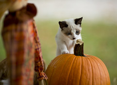Ruby_Curious (TaylorB90) Tags: cats pets cute cat canon dof adorable kittens sharp aww 5d 135 playful 135l taylorbennett 5d3