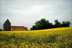 Glimmingehus (*Kicki*) Tags: summer yellow skne sweden sterlen glimmingehus