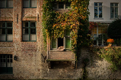 Lazy Dog (Raphaël Melloul) Tags: door windows light sleeping dog chien tree cute green window beautiful animal rock cat automne river photography 50mm canal photo cool nikon perfect doors photographer shot belgium belgique photos f14 famous brugge lazy bruges asleep nikkor animaux raphael celeb tranquil symetric fenetre mignon d800 photographe endormi photographies famousdog canaux melloul celebre colorphotoaward flickrunitedaward