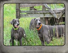 "FINAL Blue Weim 2014 calendar_Page_04 • <a style=""font-size:0.8em;"" href=""http://www.flickr.com/photos/109220014@N05/10955637605/"" target=""_blank"">View on Flickr</a>"
