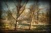 Autumn Light (Bigshot Photographer) Tags: memoriesbook treesdiestandingup