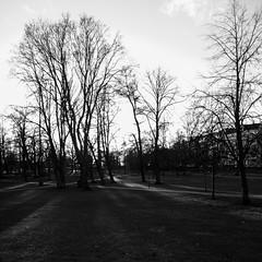 Kaivari (Antti Tassberg) Tags: park windows sunset blackandwhite bw sun tree monochrome silhouette zeiss suomi finland nokia helsinki raw sundown smartphone scandinavia wp puu kaivopuisto puisto auringonlasku carlzeiss aurinko 1520 kaivari uusimaa dng lumia mobilephotography pureview phablet lumia1520 puhletti