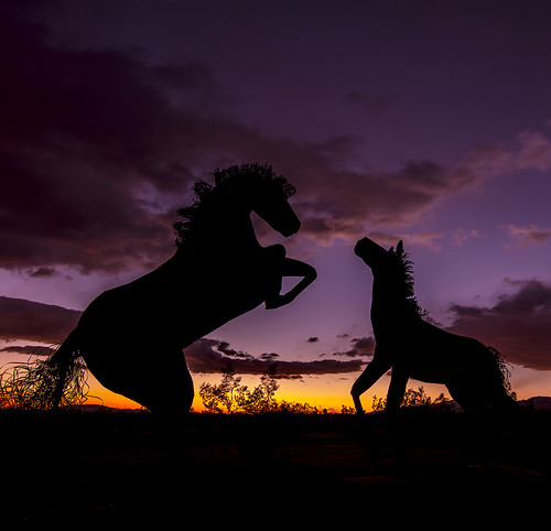 Horsing Around In The Desert