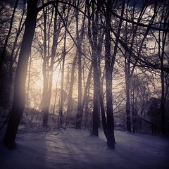 Even the coldest mornings have a sunrise (Eliza Belle Photography) Tags: trees winter snow cold nature rural forest sunrise outdoors morninglight woods pennsylvania snowy beautifullight chester pa springs wintersunrise snowylandscape iphone bittercold iphonephotography thebestcameraistheonethatswithyou instagram uploaded:by=flickrmobile flickriosapp:filter=nofilter