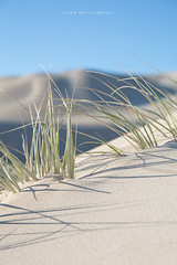 Sand Dune (john white photos) Tags: nature grass coast sand ripple dune hill australian australia growth coastal southaustralia eyrepeninsula