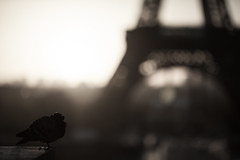 Oiseau de Paris (Julien Perignon) Tags: paris toureiffel