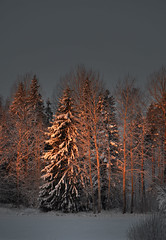 Evening sun (Tjidididi) Tags: winter light sunshine evening darkness sweden