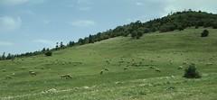 Middle Atlas Mountains Landscape (Mekns-Tafilalet Region, Morocco) (courthouselover) Tags: landscapes atlasmountains morocco maroc  middleatlasmountains almaghrib meknstafilalet meknstafilaletregion rgiondumeknstafilalet