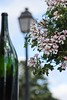 A Bottle on Display (haberlea) Tags: france chinon loirevalley touraine bottle winebottle empty flowers lamp street view wine display