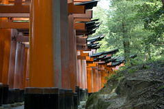 Path of Torii's (Patrick Vierthaler) Tags: inari fushimi taisha mt inariyama yama kyoto southern shrine shinto famous summer hike hiking torii red rote