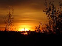 A beautiful Prairie sunrise (peggyhr) Tags: peggyhr sunrise silhouettes trees sun sky dsc06978 bluebirdestates alberta canada