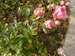 2016-10-25-7314 (vale 83) Tags: ladybird nokia n8 macrodreams friends colourartaward lunaphoto