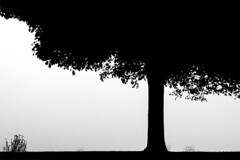 Winter Day, Crescent Beach (ScarletBlack) Tags: tree monochrome blackandwhite contrast fog minimalist silhouette crescentbeachpark crescentbeach