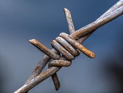 Barbed Wire (benevolentkira7) Tags: barbed barb wire tensile rusty metal close macro bokeh diffuser
