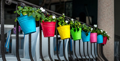 Flowerpots (gibboleica) Tags: bright colour europe flowerpot italy lago lake maggiore places railing