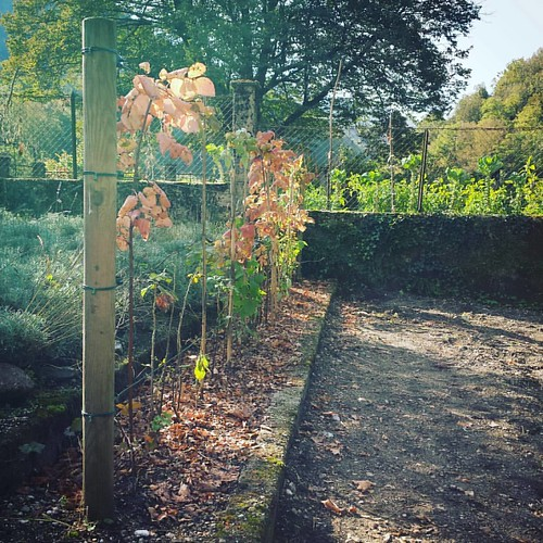 Raspberry hedgerow, done! #diy #hotellucija #gardening #hotelgarden #fruit #garden #mostnasoci #socavalley #slovenia