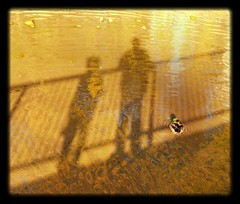 """""""Very little is needed to make a happy life; it is all within yourself, in your way of thinking."""" - Marcus Aurelius (Trinimusic2008) Tags: trinimusic2008 judymeikle nature urban shadows duck november 2016 outdoorstoronto to ontario canada shadowplay selfie keira"""