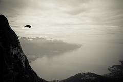 Over Geneva Lake (Mivr) Tags: rochersdenaye montreux switzeland lake geneva bird flying fog morning