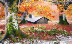 Olentzeroren etxea (Mimadeo) Tags: house forest autumn cabin stone tree shed branch leaf leaves trees shelter hovel hut refuge shack rustic old landscape cottage small gorbea paisvasco basquecountry euskadi magic dreamy fairytale fantasy mysterious tale fairy mystery enchanted magical dreams beautiful