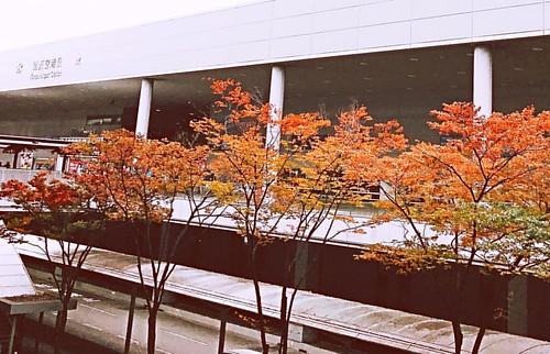 一種回日本家的概念~看楓紅🍁