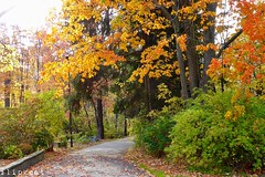 Autumn Song (flipkeat) Tags: landscape canadian autumn fall colours awesome different