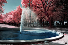 The fountain (BryzePhoto) Tags: infrarossi infrared ir r69 690nm 690 falsecolor fountain fontana castelvetrano sicily italy colors colorful colori colorexplosion alberi trees villacomunale villa amazing art cielo beautiful clearsky emotions emotion life love lovely moment nature natura sky water acqua pinktree pinktrees