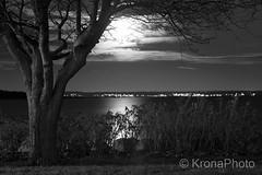Moonlit night, sgrdstrand, Norway (KronaPhoto) Tags: 2016 hst natt natur night sgrdstrand norway mne moon mnelys moonlight oslofjord water sea sj mirror speil tre tree canon nature dark bw bnw reflection